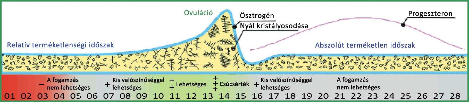 menstruációs ciklus DONNA ovulációs mikroszkóp